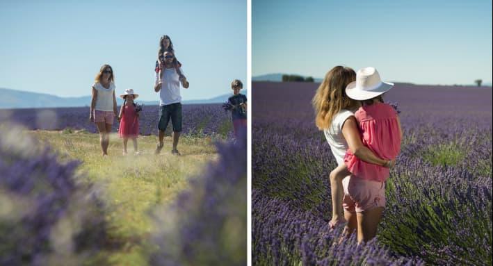 La lavande est en fleur en Haute-Provence et dans le Verdon